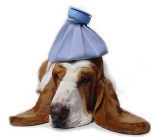 controllo sanitario del cane