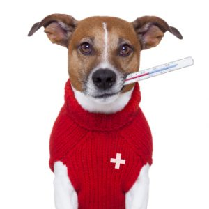 cane che si controlla la febbre