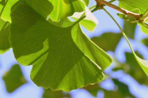 erbe e piante naturali