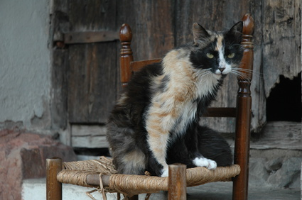 gatto vecchio con ipertiroidismo