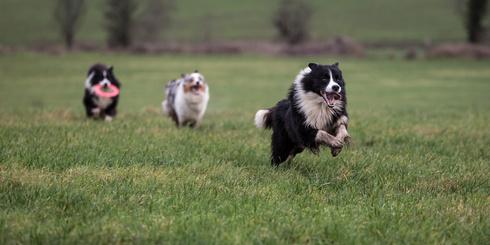 cani felici e sani che corrono