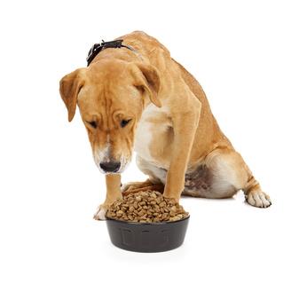 crocchette per cani tossici