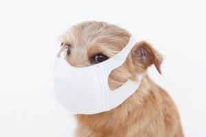 cane allergico
