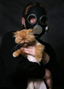 antiparassitari chimici che non piacciono al gatto