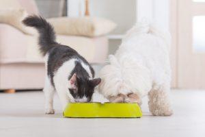 cane e gatto che mangiano dalla ciotola
