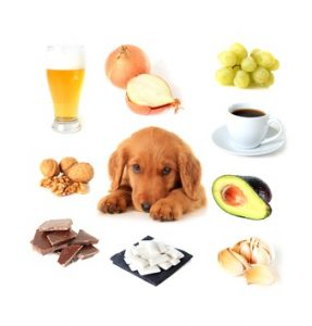 alimenti vietati per il cane