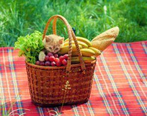 un gatto nel cestino di frutta e verdura