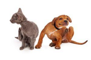 cane e gatto che si grattano
