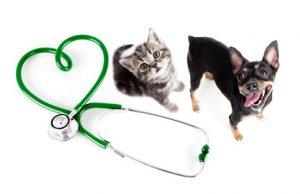 Cane e gatto curati dalla insufficienza cardiaca