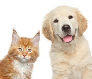 cane e gatto felici di essere liberi da veleni