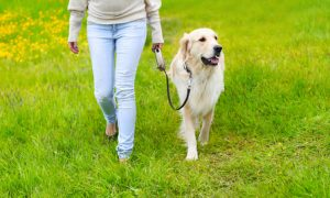 cane a passeggio in natura