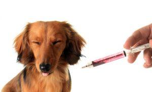 cane che ha paura dell'iniezione