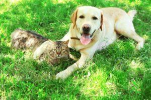 cane e gatto insieme nel prato