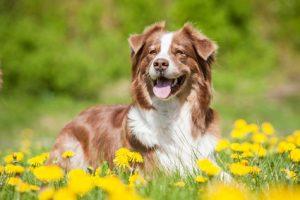 Cane con equilibrio ormonale e del cortisolo