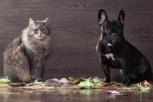 cane e gatto che hanno appena finito di giocare