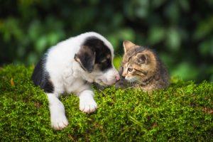 cuccioli di cane e gatto che si annusano