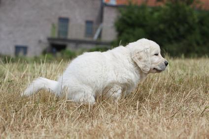 Un cane in grande difficoltà