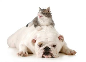 gatto e cane stanchi per ipotiroidismo