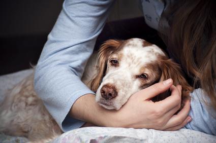 Un cane infelice