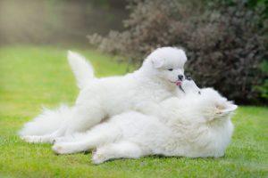 cane gioca con la madre