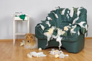 cane che distrugge divano