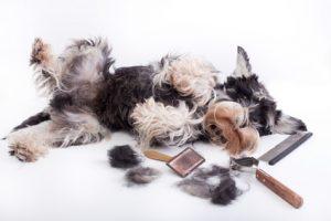 perdita pelo cane