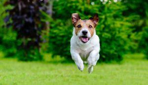 cane che salta e corre
