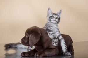 cane e gatto che giocano