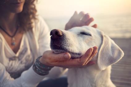 Un cane molto felice
