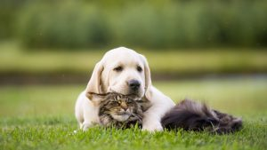 cane e gatto rilassati sul prato