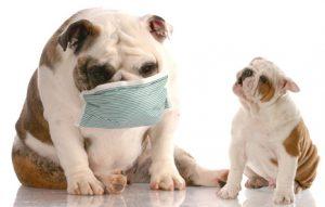 cane con influenza e allergico