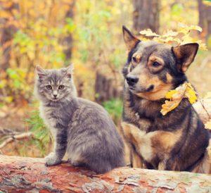 cane e gatto nel parco