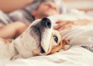cane felice che dorme con padrone