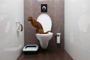 gatto che urina