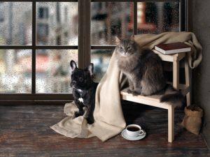 cane e gatto con coperta al riparo dal freddo