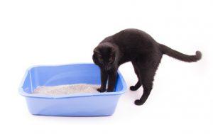 gatto con difficoltà motoria