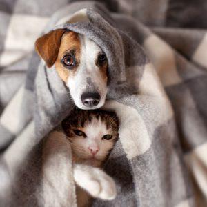 cane e gatto con influenza e raffreddore