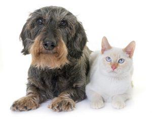 cane e gatto anziani