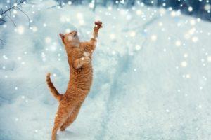 gatto che gioca con la neve
