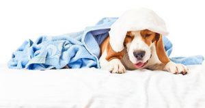 cane con tosse