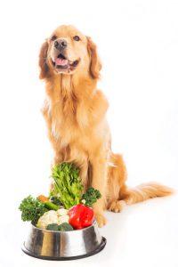 cane felice che mangia cibo sano