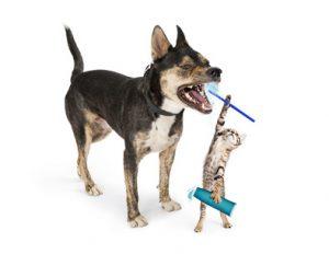 Gatto che spazzola denti al cane