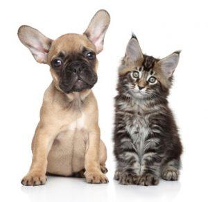cane e gatto orecchie dritte