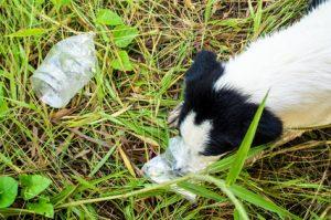 cane che mangia plastica