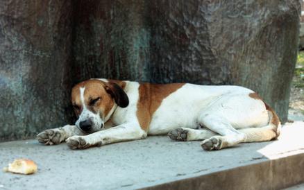 Cane che dorme all'ombra