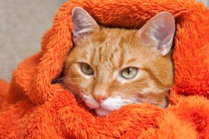 gatto malato coperta arancione