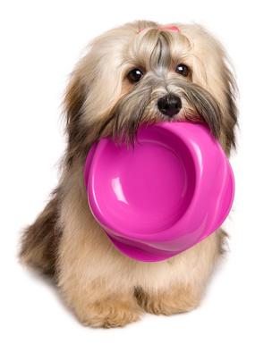Un cane che porta la sua ciotola
