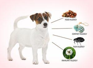 cane e le cause della allergia