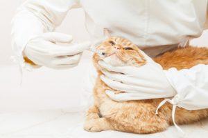 come dare medicina al gatto