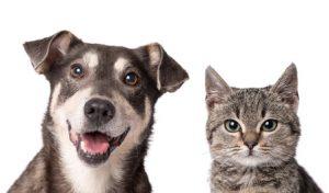 cane e gatto in buona salute